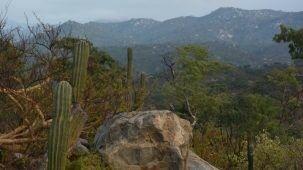 el-kamnes-mexicanos-1-792x445