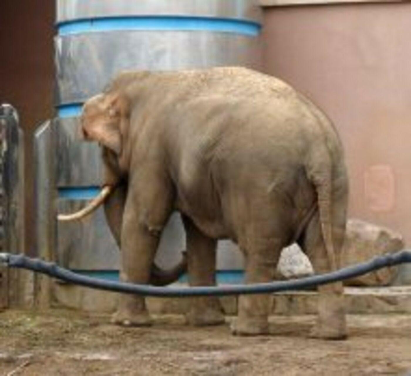DSC05143 слон